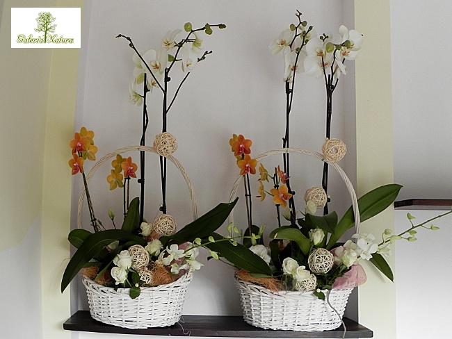 7 kwiatów Pielęgnacja storczyka  to naprawdę łatwe!